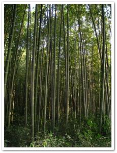25-담양 대나무통밥과 떡갈비-담약 죽녹원2.png